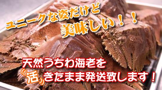 utiwa (1)